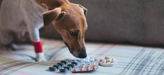 Wurmkur Bei Hunden Welches Mittel Ist Das Richtige